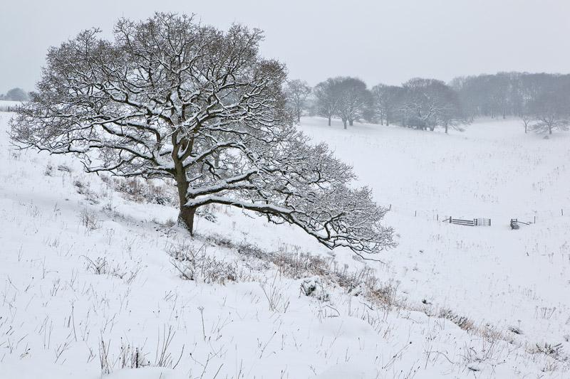 Snowfall Middleton Down