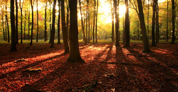 Sunlit Autumn Woodland