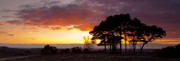 Sunset Ibsley Common