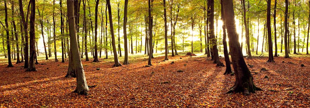 Vernditch-Chase-in-Autumn