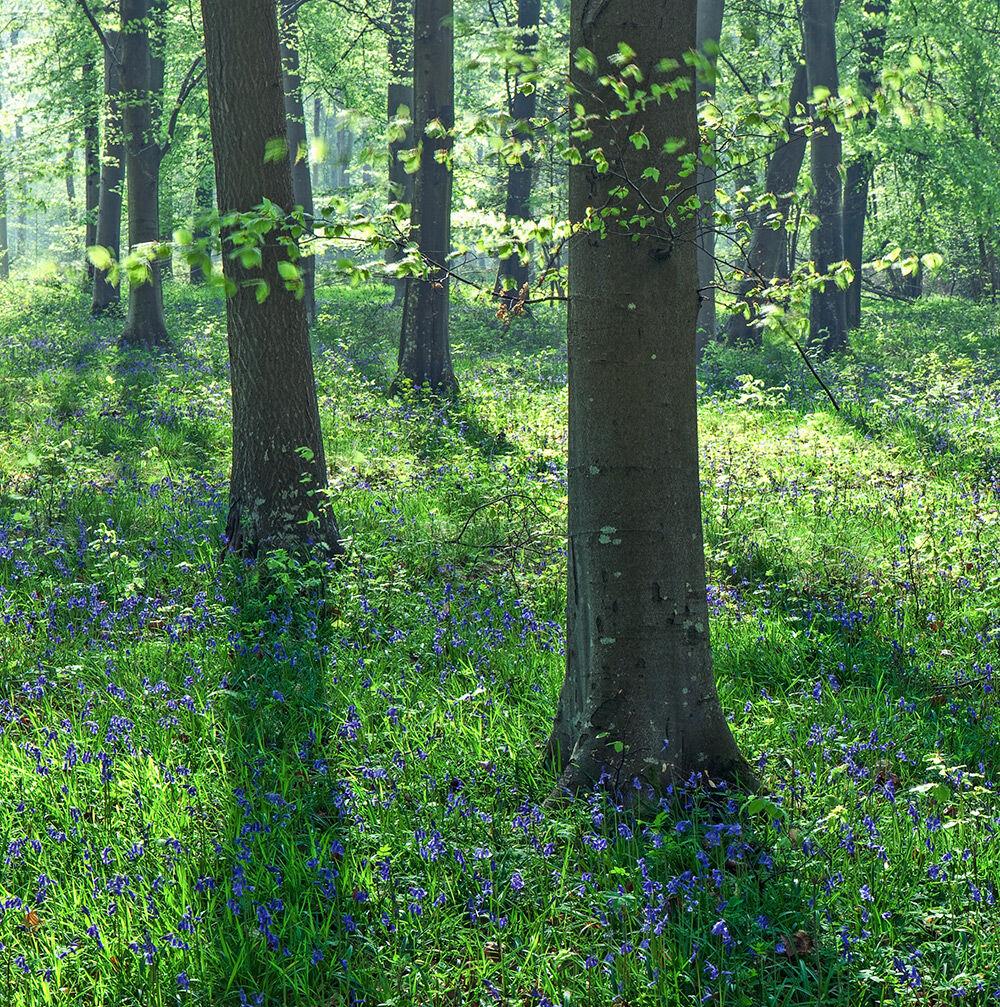 Vernditch Spring Woods
