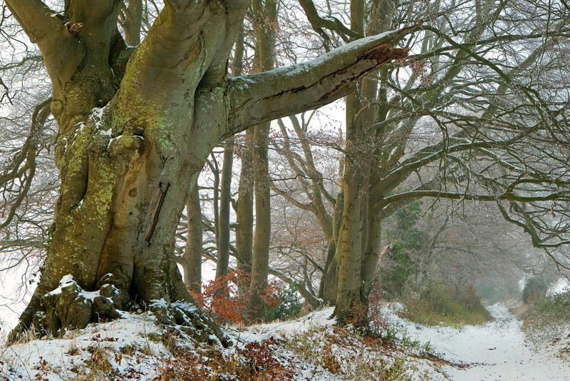 Winter on Faulston Drove