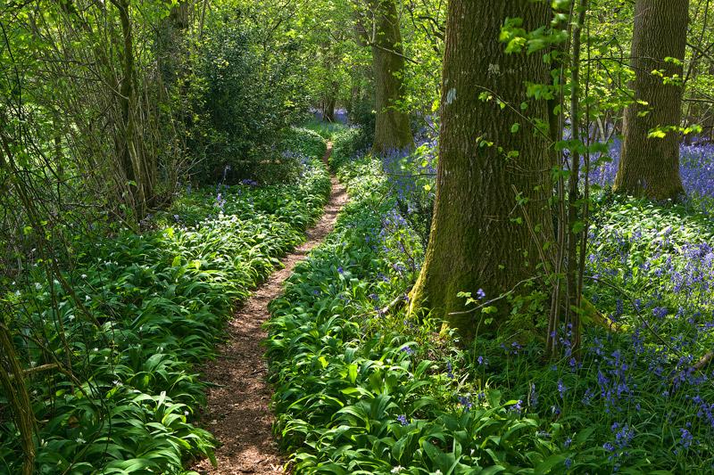 Woodland Walk near Deanland