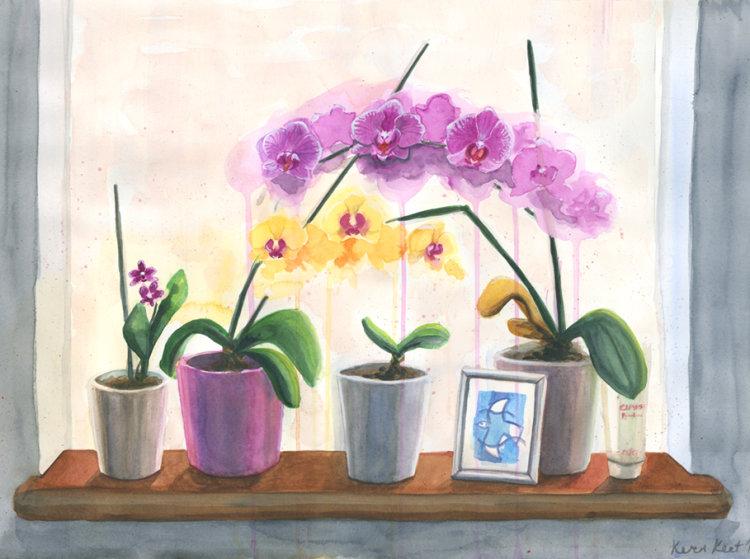 Windowsill Orchids
