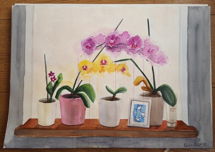 Windowsill Orchids step 5