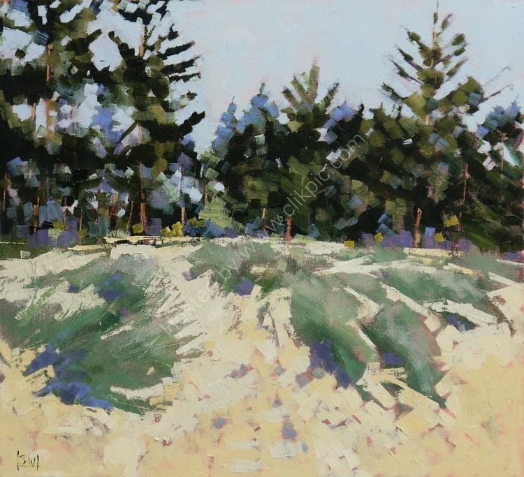 Holkham pines 4