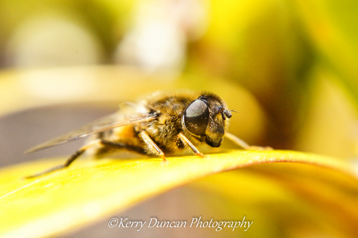 Bees Eye View