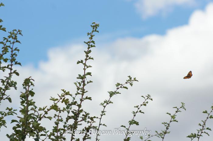 Hedge Flutter