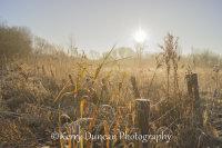 Frosty Sunshine