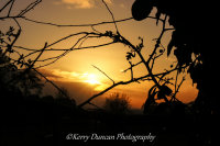 Hedgerow Sunset