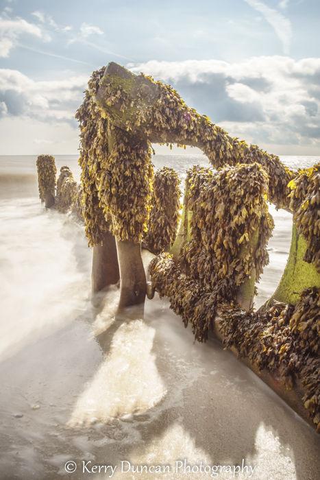A Seaweed Coat