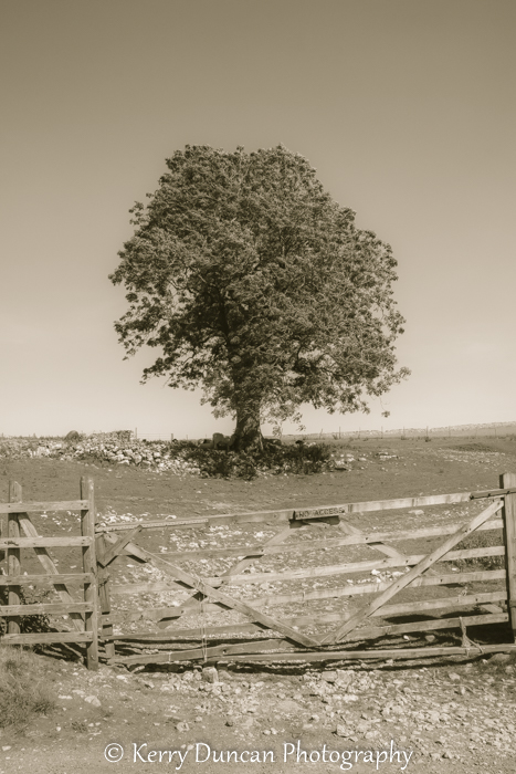 Tree & Gate