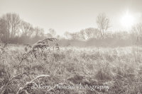 Monochrome Frost