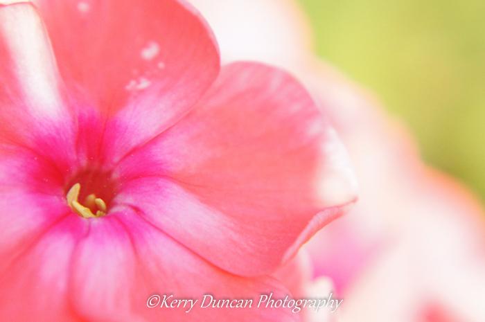 Pink Open