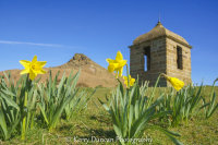 Daffodils At The Topping