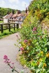 Wild Flowers And Cottages