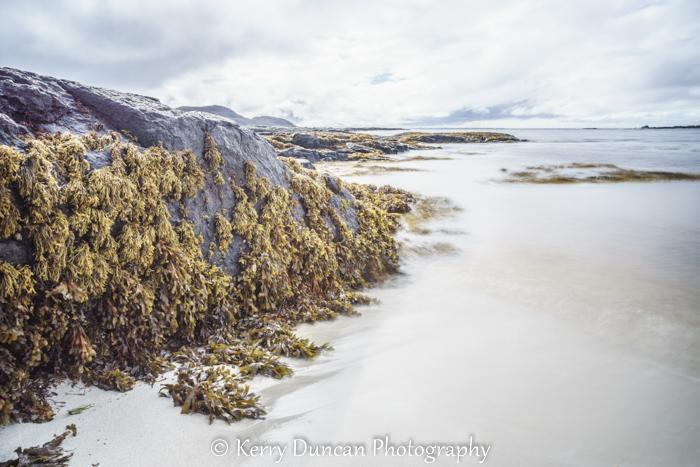 Still Seaweed Runs Deep