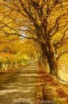 Autumn In Whinlatter