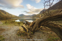 Rooted In Buttermere