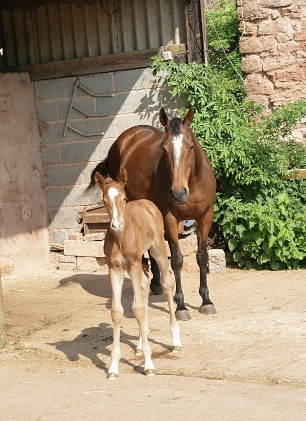 proud mum with foal