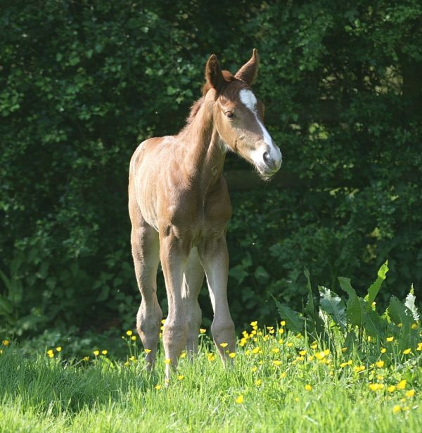 new foal first day in the field
