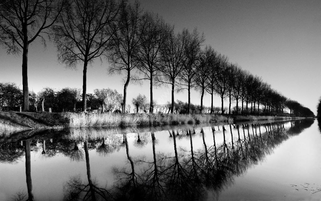 canaltrees