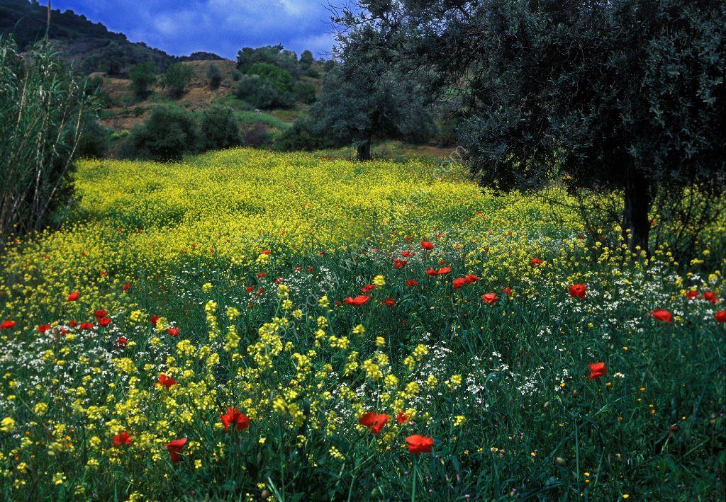 cyprus in  springtime
