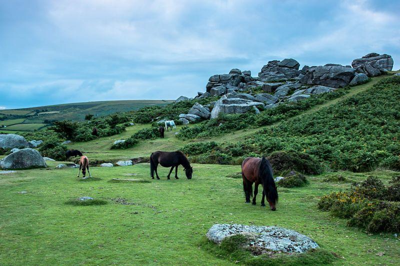 Bell Tor Ponys