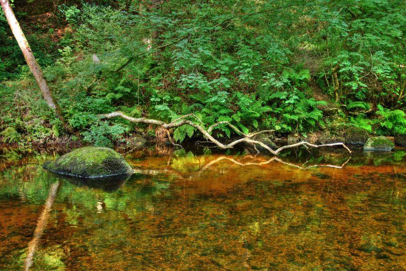 River Dart Reflection