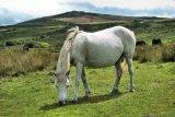 White Pony 2