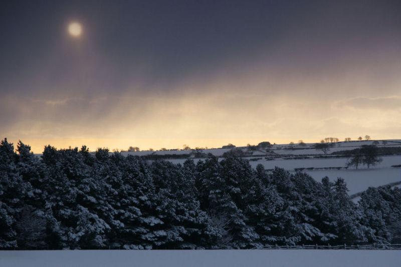 Sun through snow
