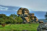 Vixon Tor ( forbidden land) or some call it 'The Sphinx of Dartmoor'