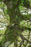 Wistmans Wood 2