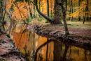 Autumn-Blackwater