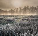 Belbins-Meadow
