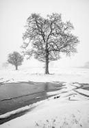 Lanford-snow
