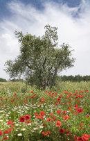 Tuscan Flora