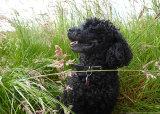 My dog, Jakob