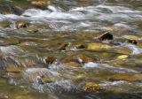 Gwili River