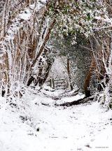 Snow way through