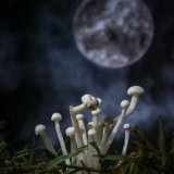 'shrooms and moon