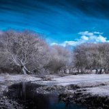 New Forest-Buck Hill-Edit