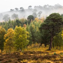 Scots Dew