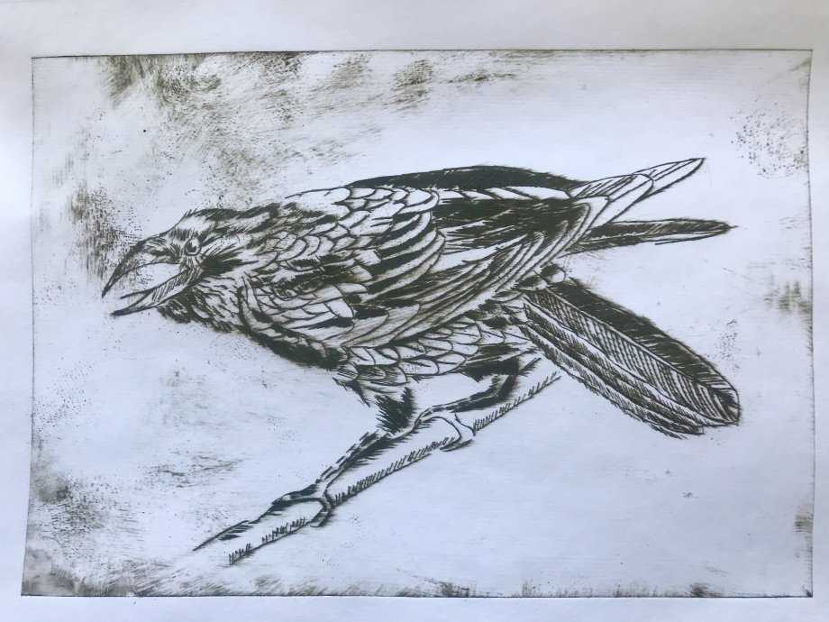 Crow - Drypoint in Sepia