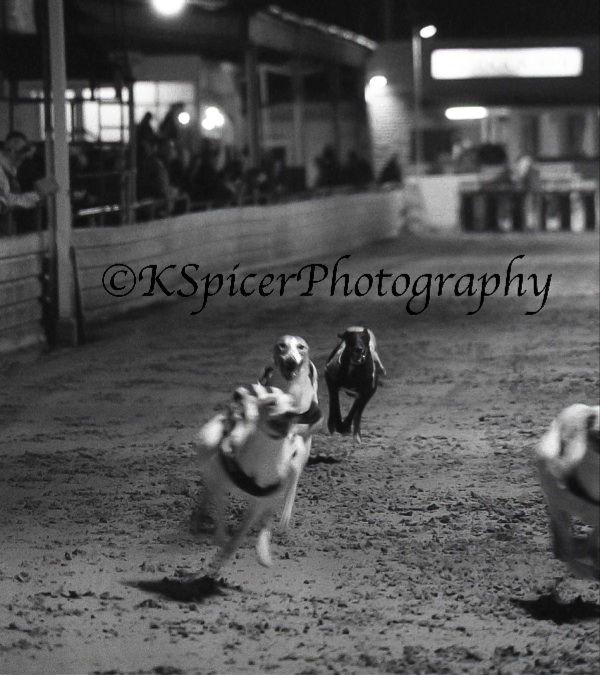 Portsmouth Greyhound Stadium 009