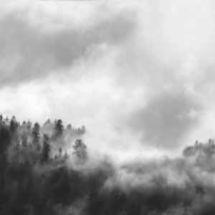 Vista Splashback - Hazy Forest - Gloss  finish - from Kitchens InSynk Ltd
