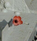 Delicate Remembrance