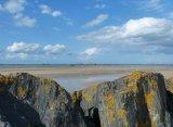 Gold Lichen at Gold Beach