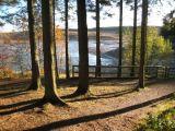 Trees in Evening Sun