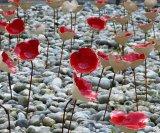 Normandy Memorial Poppies